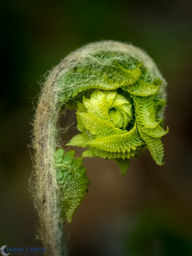 Birth of a Fern